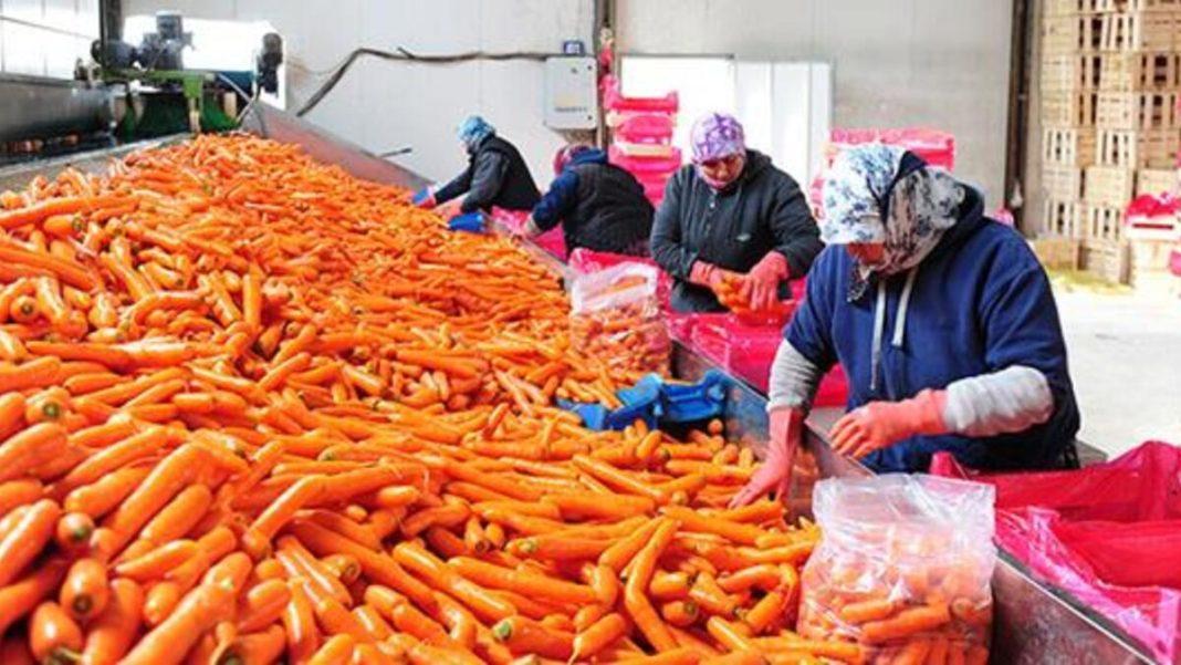 Eskişehir'de üretilen havuçlar Beypazarı'nda paketleniyor
