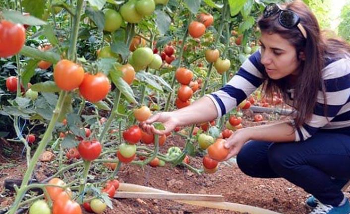Tarım danışmanlarına ödenecek destek belli oldu