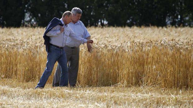 Rusya, tahıl için kalıcı bir yeni ihracat mekanizması başlatıyor