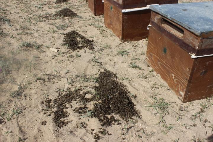 arı telef oldu